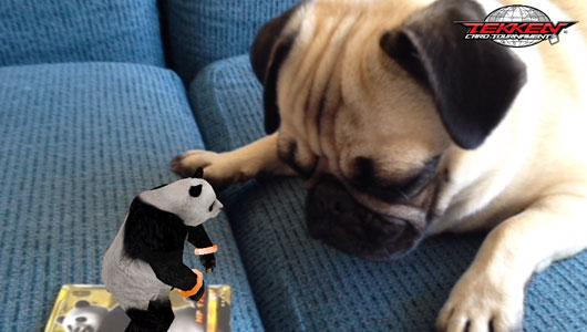 AR-Panda-with-dog